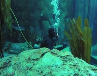 IndyCar video: Hinchcliffe's underwater news conference